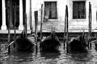 Venice Italy 2008 2922 -B&W Version 2