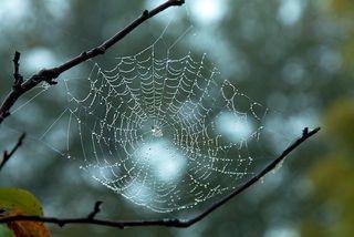 Spider's Web 14 - Version 2