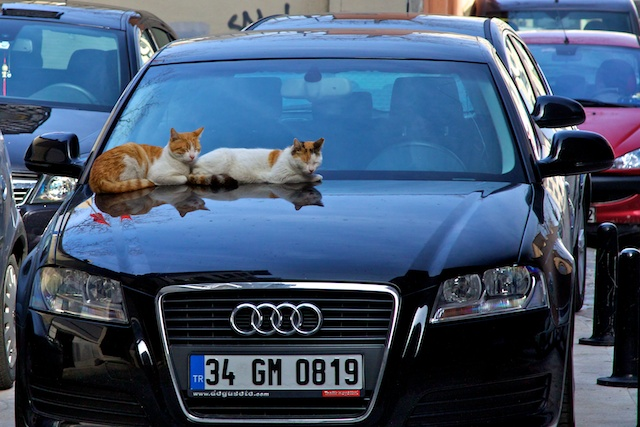 Cats on hot tin roof, Istanbul