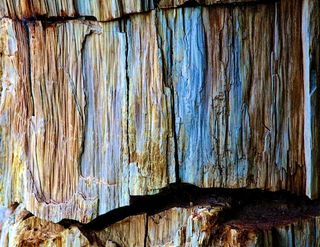 Petrified Wood abstract
