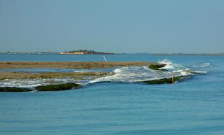 High tide swamps mudflats