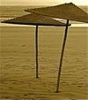 Sepia_umbrellas
